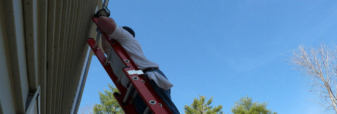 Black Bear Ladder